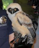 Owl 2009 -->>