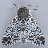 Noctuidae (8880 - 9324)