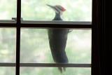 At kitchen window