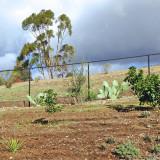 Hill Greening