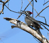 March 16 - female foraging