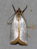 5462  Mother-of-pearl Moth - Argyria rufisignella