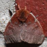 7746 Io Moth