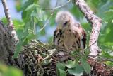 Chick - May 23/07