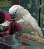 The Money Bird