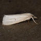 5500  Grass-veneer  - Xubida panalope