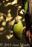 Un Mango por la Mañana