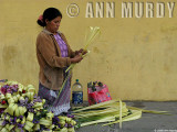 Palm Weaver