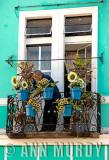 Watering plants on Calle de las Flores