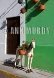 Horse on Calle de las Flores
