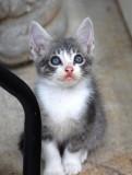 6.27.15 stray kitten 2.JPG