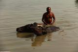 Buffalo scrub 1.jpg