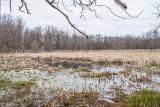 Thousand Acre Swamp 2014
