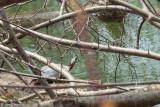 Turtles of Lagoon Park 2014