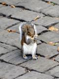 I love a good nut