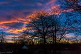 sunrise backyard 11 28 15.jpg