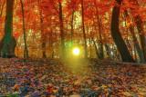 leaves fall wildwood.jpg