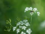 Insecte sur Fleurs