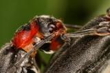 alien bug (IMG_1695p.jpg)
