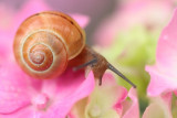 art - snail - polž (IMG_9003m.jpg)