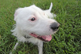 dog look - pasji pogled (IMG_5989m.jpg)