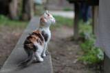 kitty - mucka (IMG_7082m.jpg)