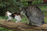 kitty - mucka (IMG_7069m.jpg)