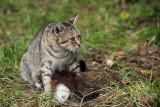 mother - muca maca (IMG_7129m.jpg)