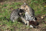 kind fight - prijazen ugriz (IMG_7117m.jpg)