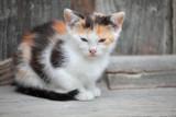 kitty - mucek (IMG_7107m.jpg)