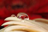 water drop - kapljica (_MG_8058m.jpg)