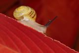 snail - polž (_MG_0160m.jpg)