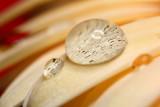 water drop -kapljica (_MG_8066m.jpg)
