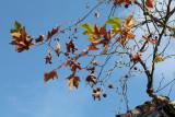 autumn leaves - listje jeseni (_MG_1712m.jpg)