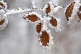 Ice lace, winter frost - ledena čipka, ivje, srež, zima (_MG_3978m1.jpg)