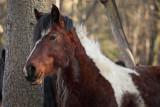 horse (_MG_9997m.jpg)