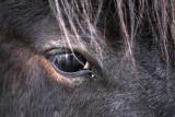 horse eye (_MG_0046m.jpg)