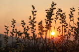 sunset in swamp - zahod na barju (_MG_0232m.jpg)