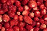 wild strawberries - gozdne jagode (_MG_8359m.jpg)
