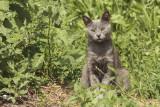 timid cat - plašna mačka (_MG_8479m.jpg)