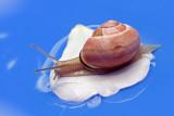 snail - polž (_MG_0282m.jpg)