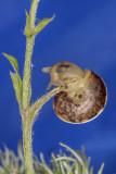 snail - polž (_MG_0437m.jpg)