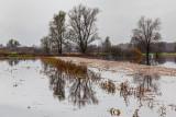 flood on Ljubljansko barje - poplavljeno barje (_MG_9648m.jpg)