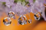 water drops and reflection - vodne kapljice in odsev (_MG_3413m.jpg)