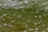 rain drops - dežne kapljice (_MG_4623m.jpg)