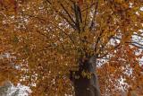 autumn - jesen (_MG_9438m.jpg)