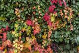 autumn colours - jesenske barve (_MG_9000m.jpg)
