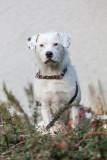 happy dog - (_MG_9019m.jpg)