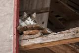 cat in hiding place - mačka v skrivališču (_MG_0089m.jpg)