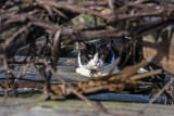 cat in hiding place - mačka v skrivališču (_MG_8885m.jpg)